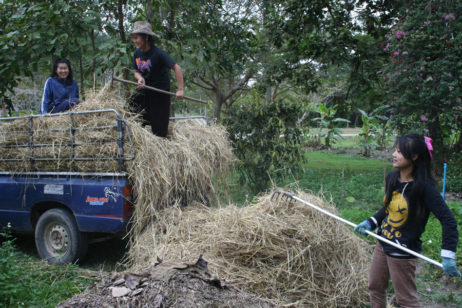 Unloading rice waste to be used as mulch