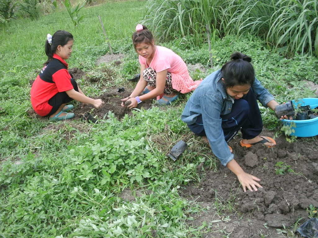 The children helped to plant vegetables
