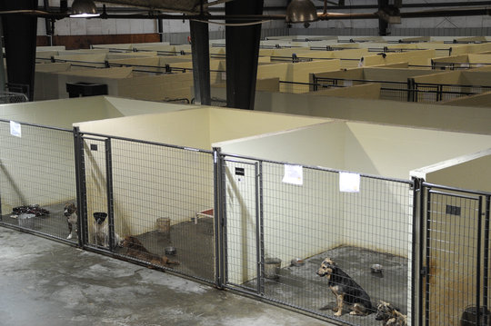 completed kennels thanks to supporters