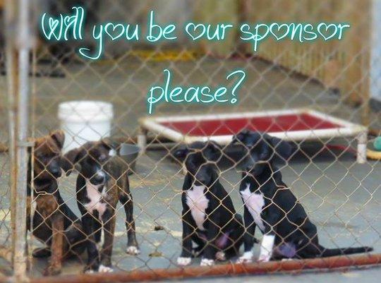 pups posing for our new sponsor program