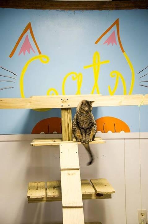 Cat surveying the splendor of his room