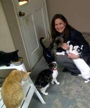 cats greating visitors in the teenaged cat room