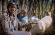 Livestock for 300 Orphan Families in Zimbabwe