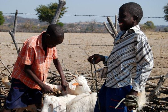 Receiving the gift of goats