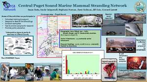 Poster about our work - W.Coast Stranding Meeting (PDF)