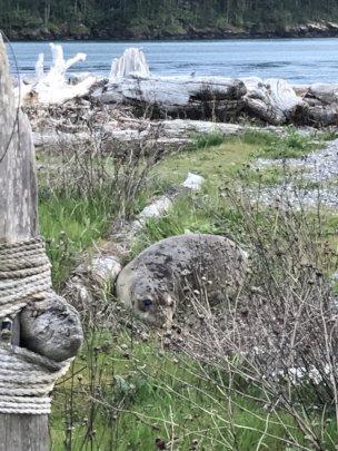 Elsie-Fidalgo Island, April 2019, A. Lemire Brooks