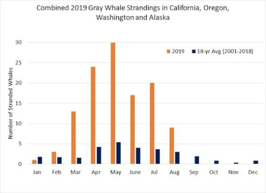 NOAA Fisheries 2019 Gray Whale deaths chart