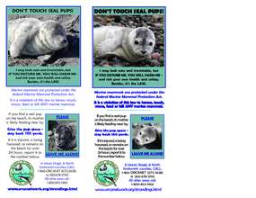 CPSMMSN Seal Pup Information Card (PDF)