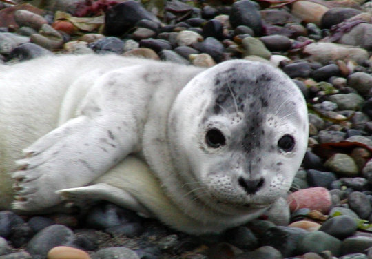 Central PugetSound Marine Mammal Stranding Network