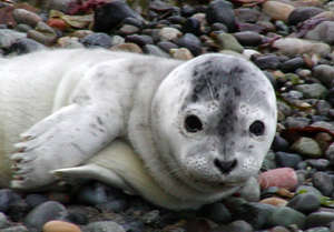 Central PugetSound Marine Mammal Stranding Network
