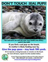 CPSMMSN Seal pup poster (PDF)
