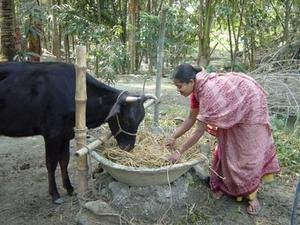 End Hunger for Rural Families in Bangladesh