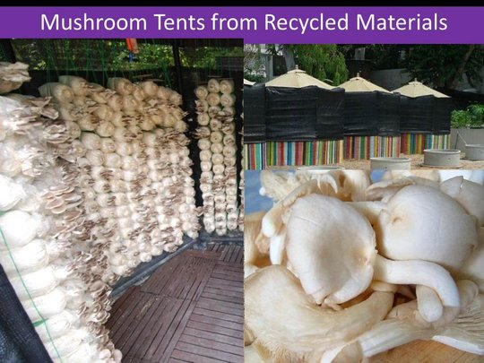 Students' Small Mushroom Growing Venture