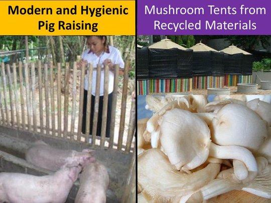 4 Students' mushroom & pig raising project