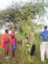 GLOBAL GIVING INSPECTS REFORESTED AREAS