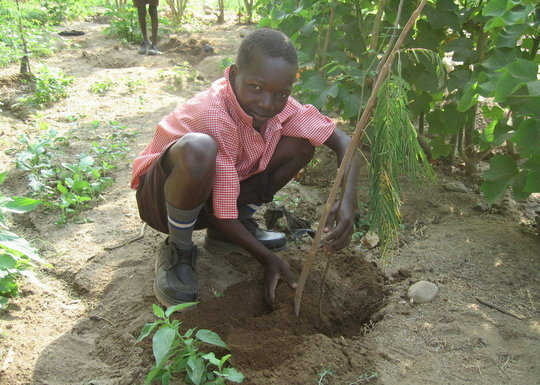 2500 CHILDREN PLANTING TREES
