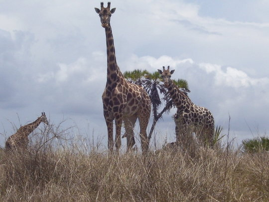 WILDLIFE RETURNING TO MAGADI