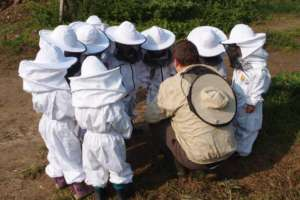 Little beekepers at work with Bee Country