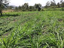 New farming coming up in samburu