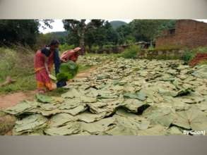 Leaves from local Sal trees used in absense of pad