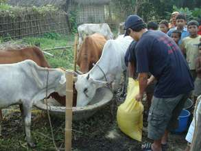 Feed distrbution in Koshi Disaster