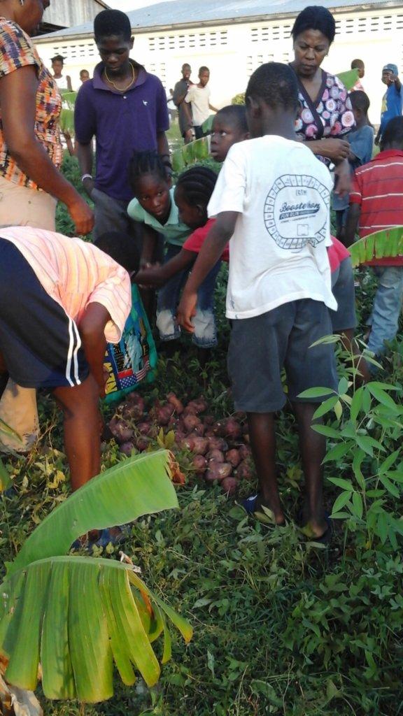 Children Harvesting Potatoes
