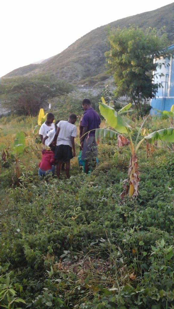 Children Harvesting Potatoes Distant