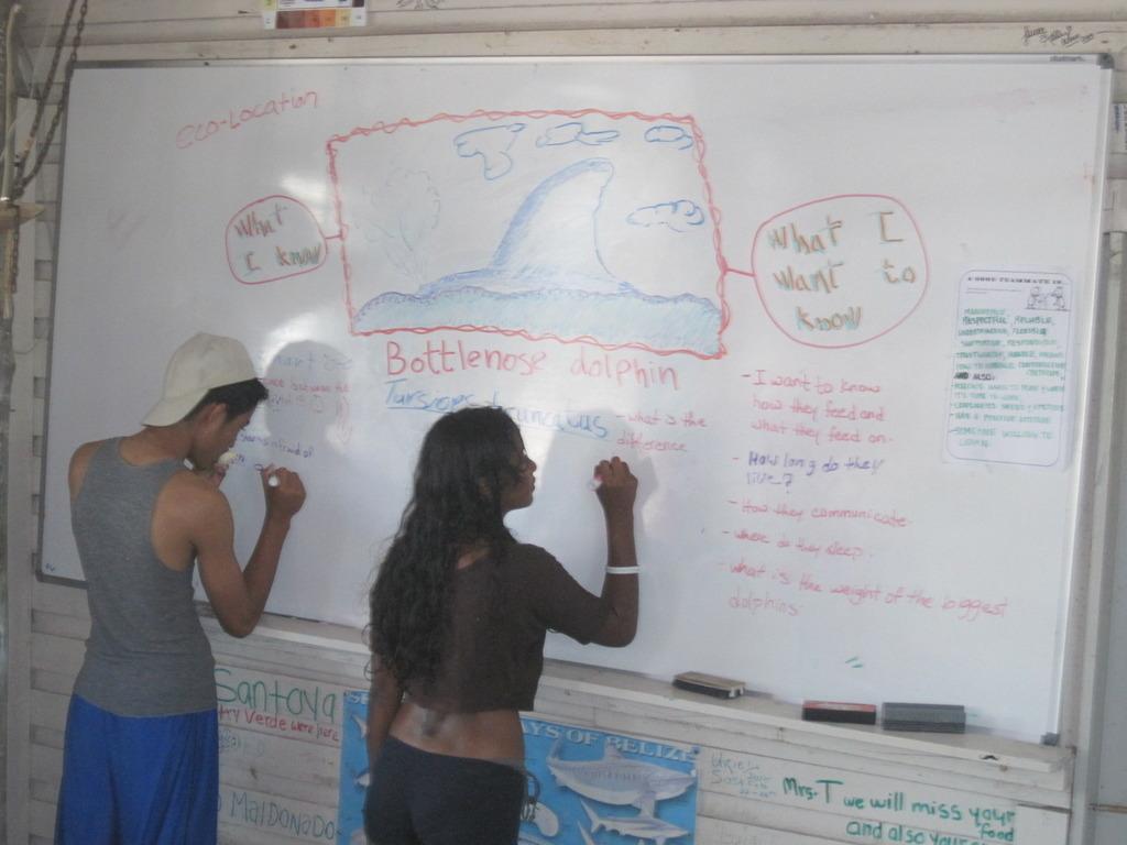 Dolphin Studies