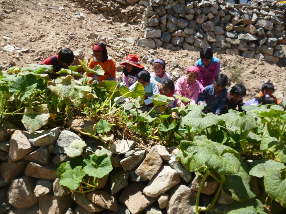 The vegetable patch in Peru to supplement lunches