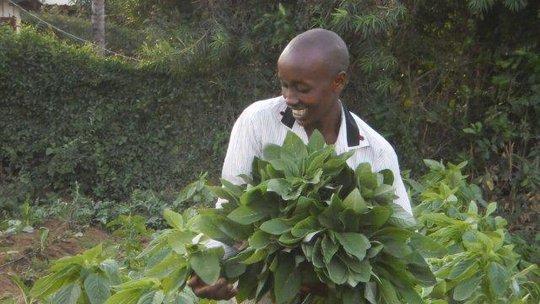 Samuel picking spinach