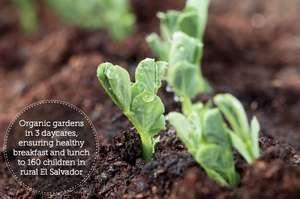 Organic gardening - it's not just a fad!