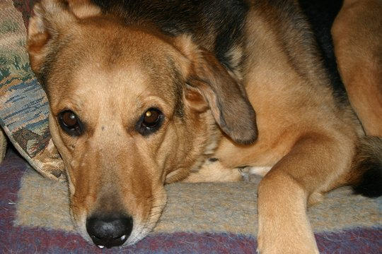 Help get Roxy home!
