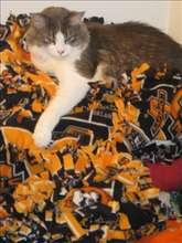 a cat enjoying Maddie's Blankets