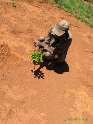 Planting trees takes TLC
