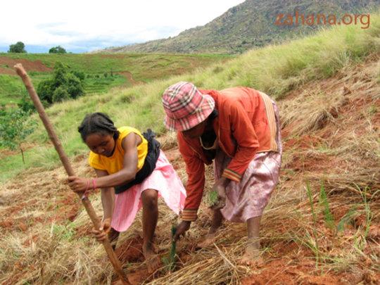 Women planting trees in rural village