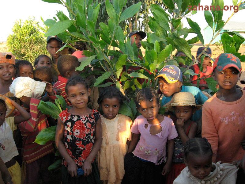 Stundets under a Zahana tree (real plant name)