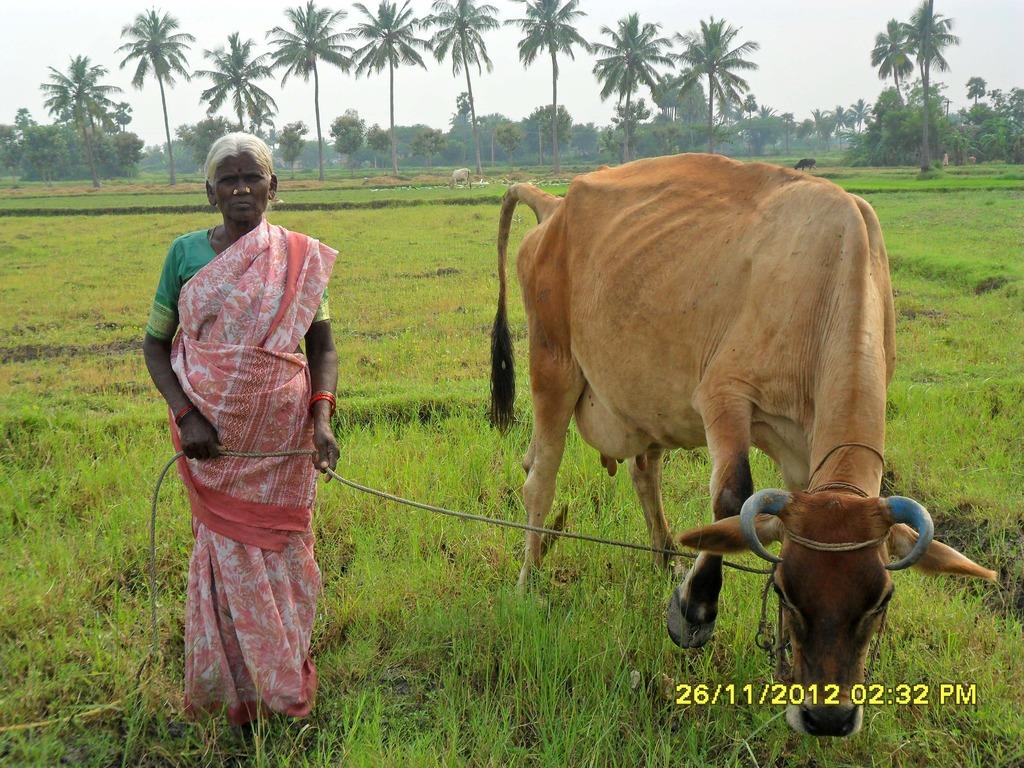 Mrs. A. Kaliyammal