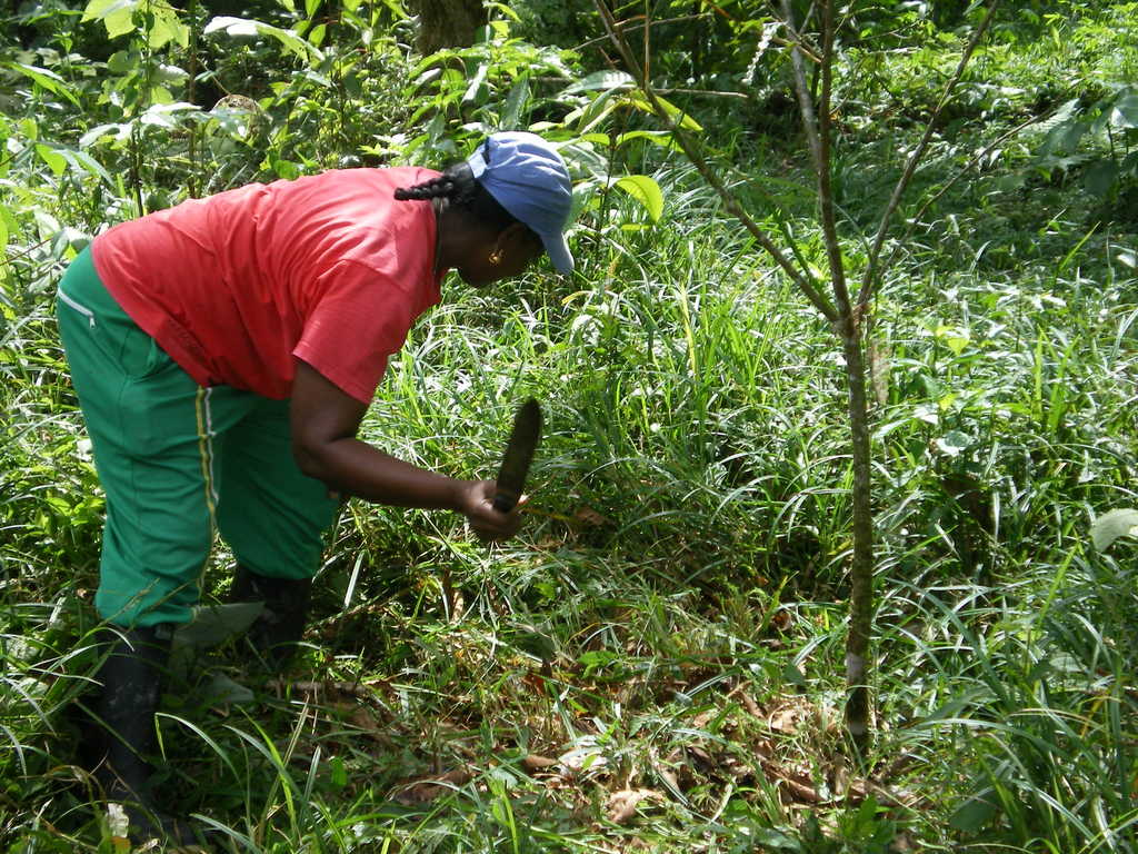 Families maintain the trees that have been planted