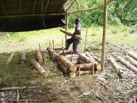 Restoring Forests for the People of Chocó