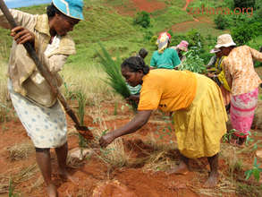 Women planting trees in Madagascar