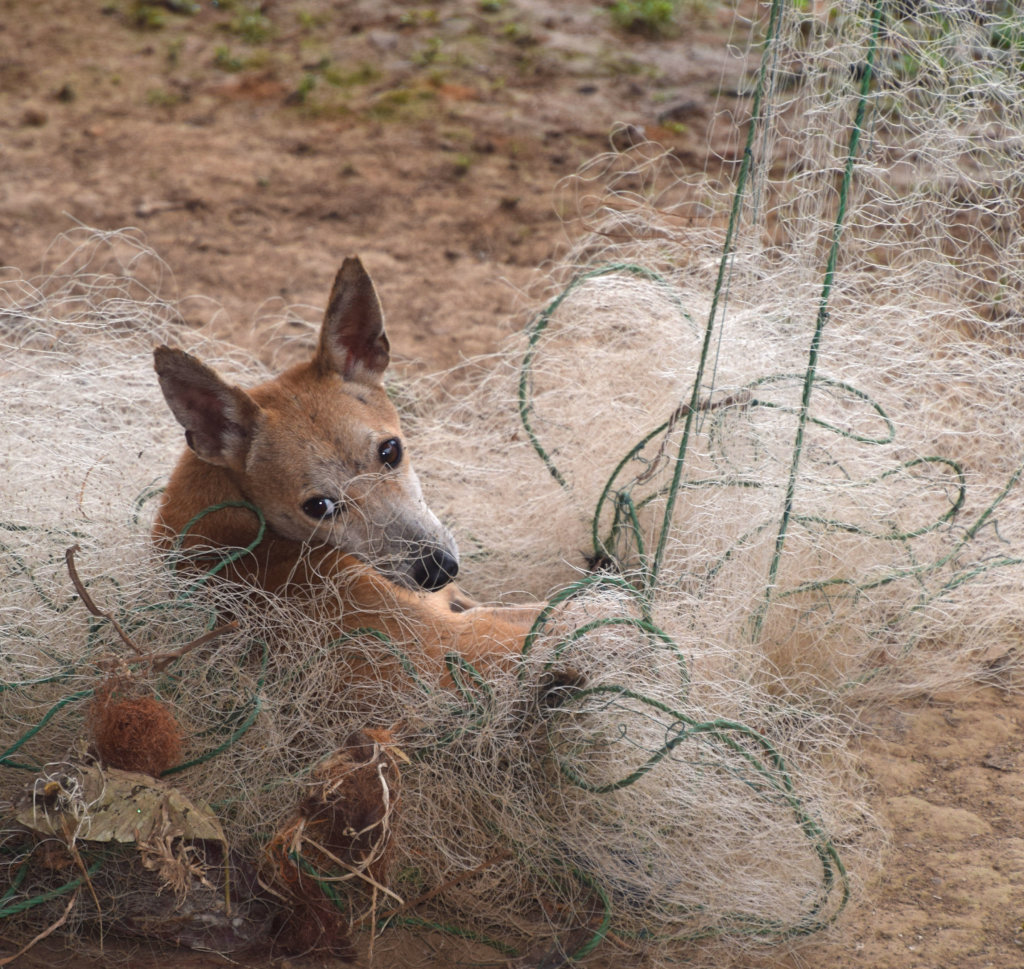 21. Dog in fishing net in Ancon Colonia