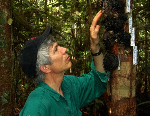 Campbell examining copal lumps in Jenaro Herrera