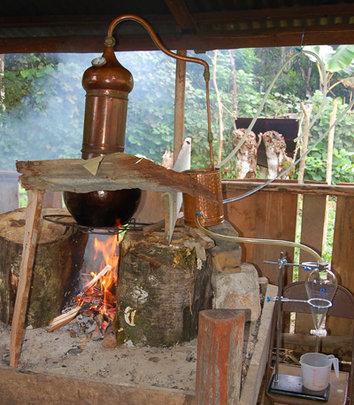 Copper alembique distiller. C. Plowden/CACE