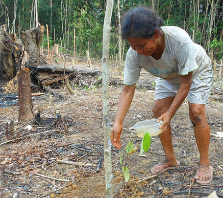 Bora woman watering rosewood tree seedling