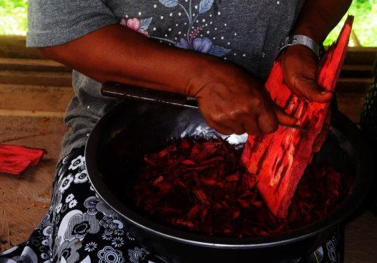 Francisca scraping huacamayo caspi bark.jpg
