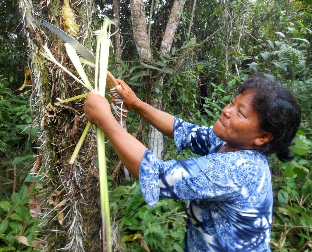 Bora artisan cutting chambira with pruning saw
