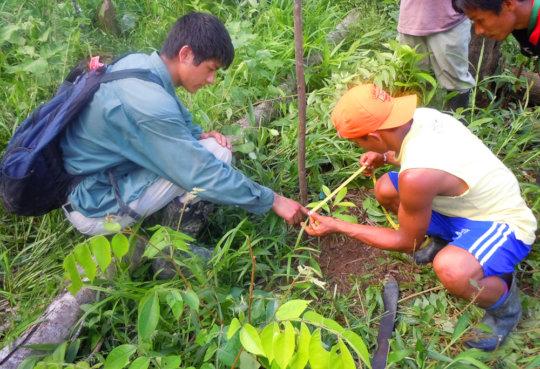 Luke measuring tree seedling with Bora woodsman