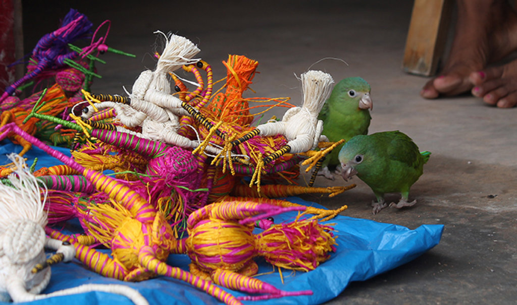Little parrots with woven egrets in San Francisco