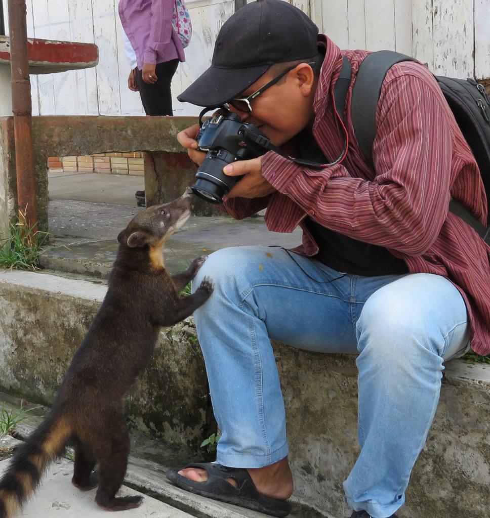 Tulio photographing coati