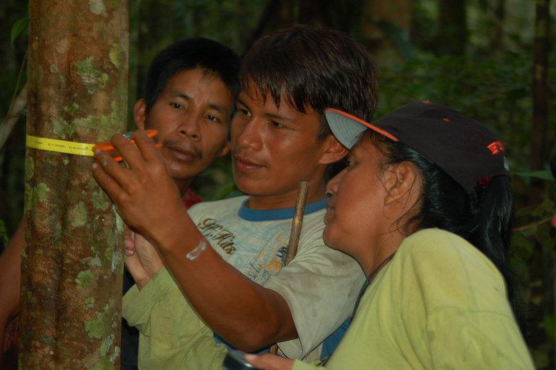 Yully Rojas measuring copal tree with Maijuna team